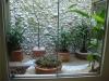 casa-com-jardim-11