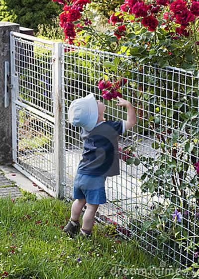 cerca de jardim ferro : cerca de jardim ferro:Cerca de Ferro para Jardim – Portão e Cercado