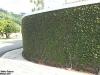 muro-com-planta-2