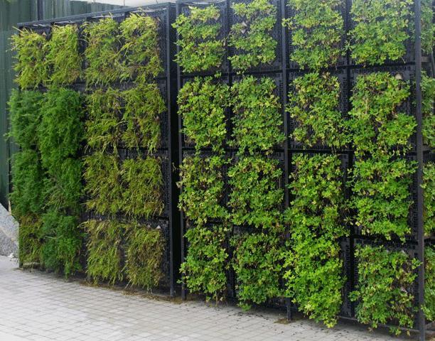 Muro com verde for Plantas para muros verdes verticales
